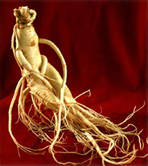 the-benefits-of-ginseng_1